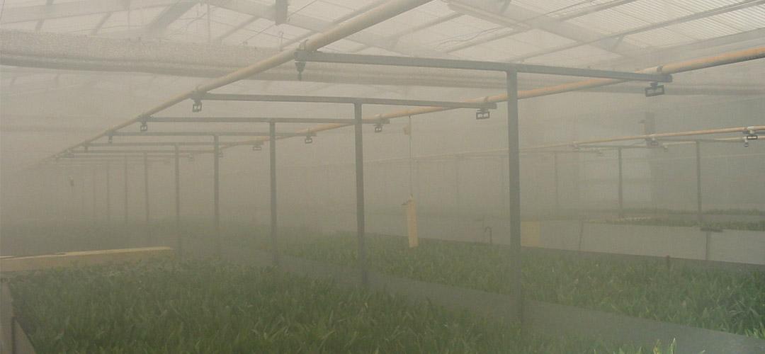 slider_greenhouse